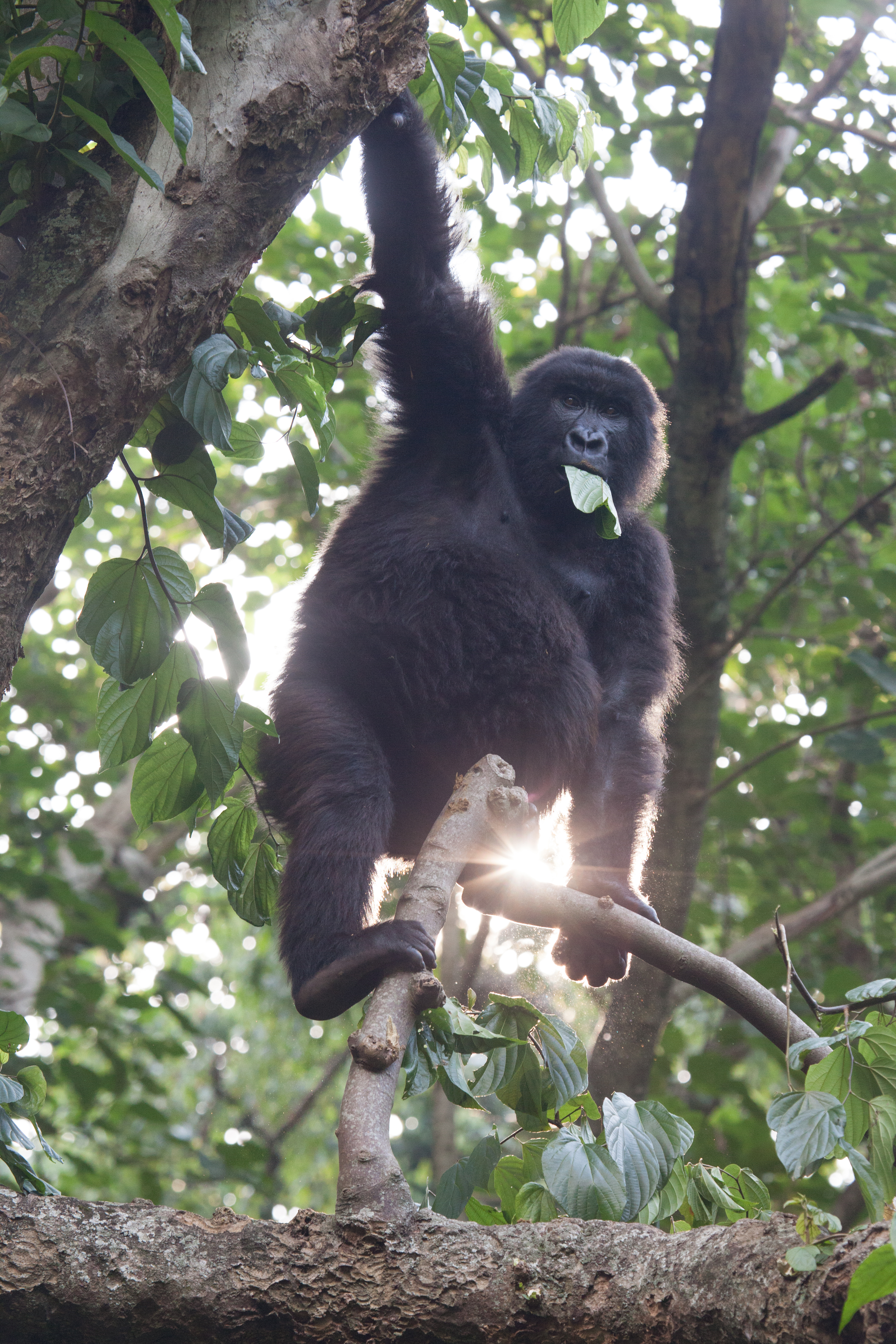 Hayes Barnard Congo Virunga GivePower